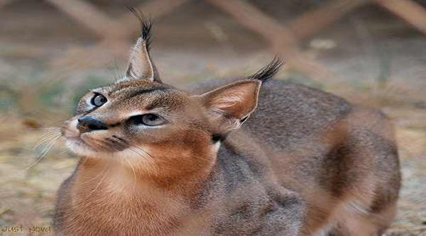 Fauna Of Egypt Egypt Desert Animals