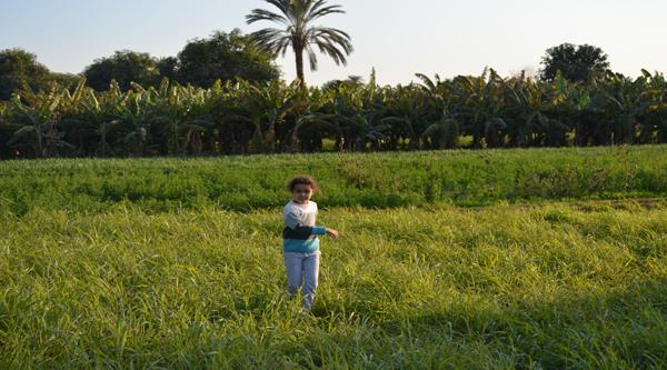 Египетская сельская местность
