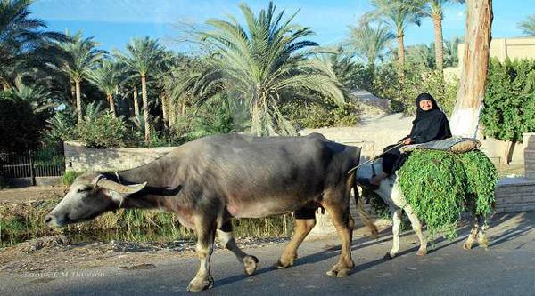 Египетская женщина в деревне