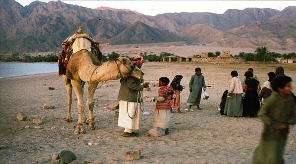 Бедуины Синая