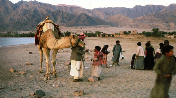 Bedouins of Sinai.