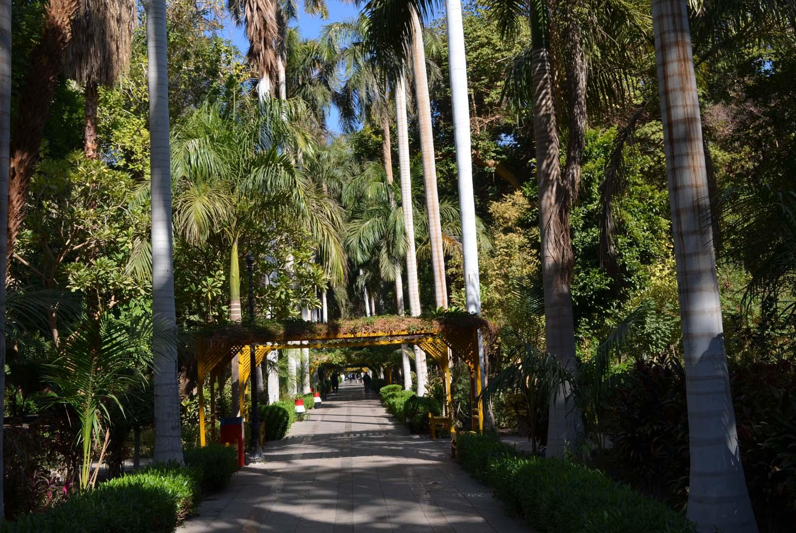 Аллея Асуанского ботанического сада