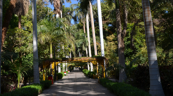 Alley of Botanical garden in Aswan.