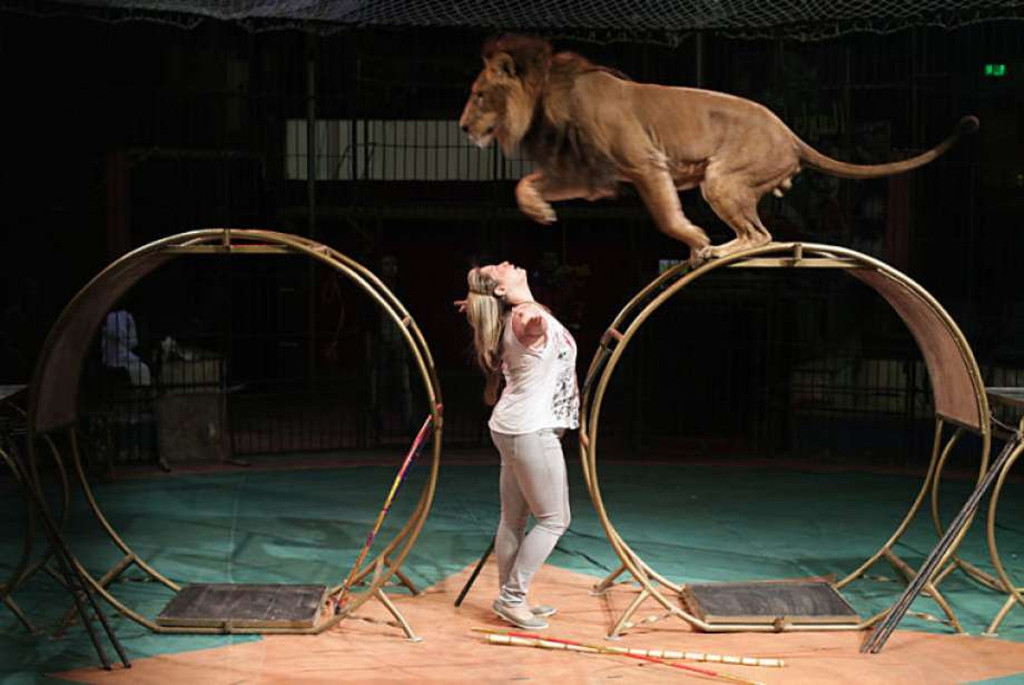 Egypt National circus in Cairo