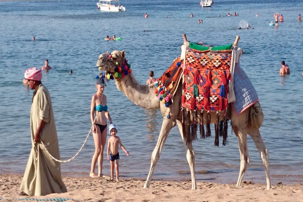 Enjoy camel riding