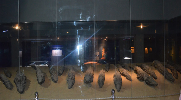 Mummified crocodiles on display at Kom Ombo museum.
