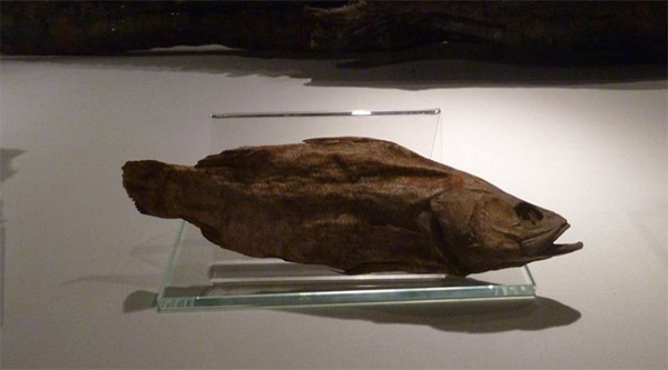 Mummy of a fish.