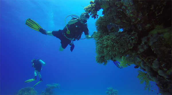 Discovering Red Sea diving in Sharm el Sheikh