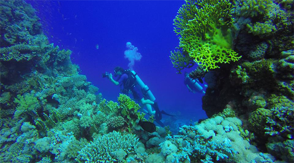 Diving among coral reefs.