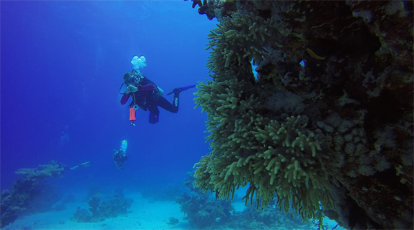 Open water PADI courses in Sharm el Sheikh