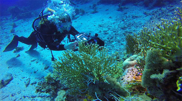 Get your PADI and dive the Red Sea