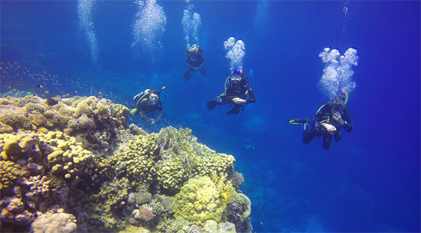 Sharm el Sheikh introductory diving trip