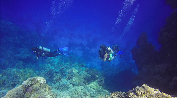 Every day scuba diving trips from Sharm el Sheikh to Ras Mohammed or Tiran island