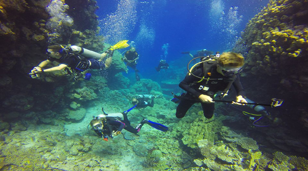 Sharm el Sheikh daily diving excursions
