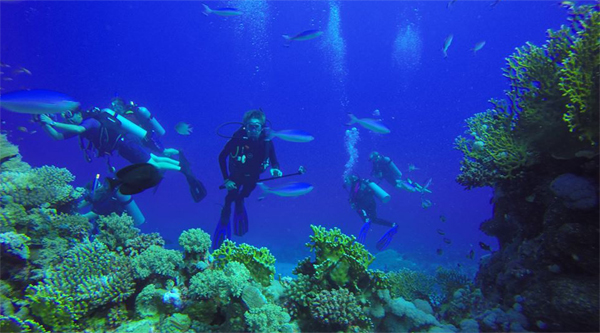 Divers swimming among the corals