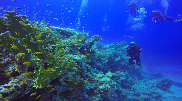 Discovering Red Sea coral reefs