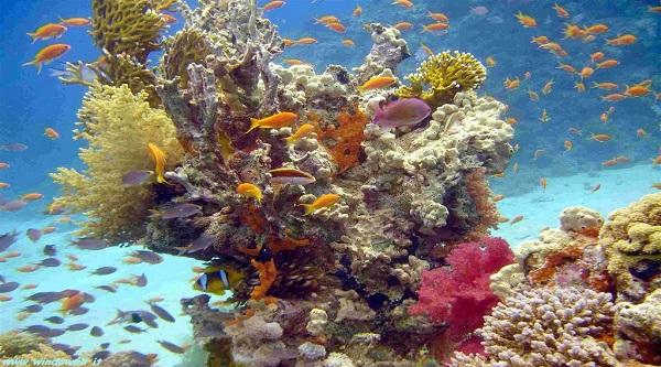 Cose economiche da fare a Sharm el Sheikh
