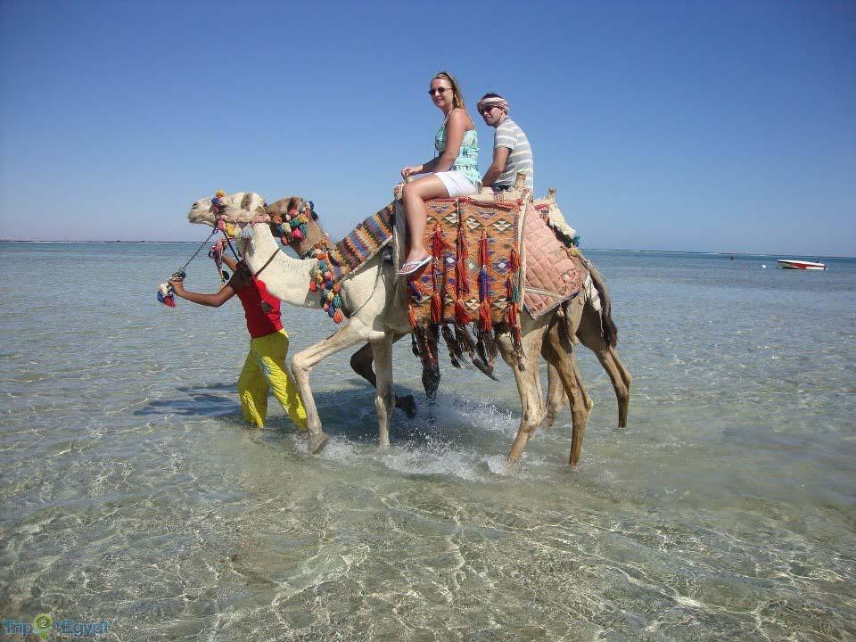 Camel ride along the shore on abu Galum safari from Sharm el Sheikh