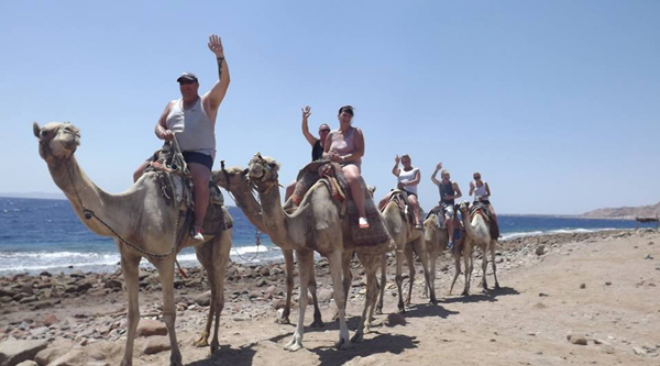 Camel ride along the shore on abu Galum safari from Sharm el Sheikh