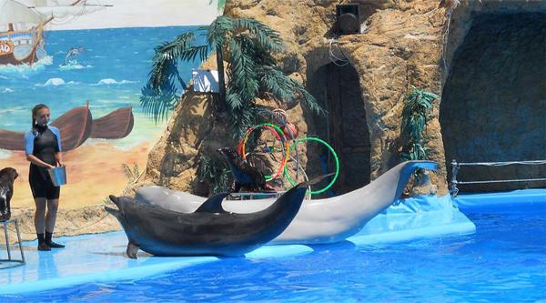 Номер с дельфинами