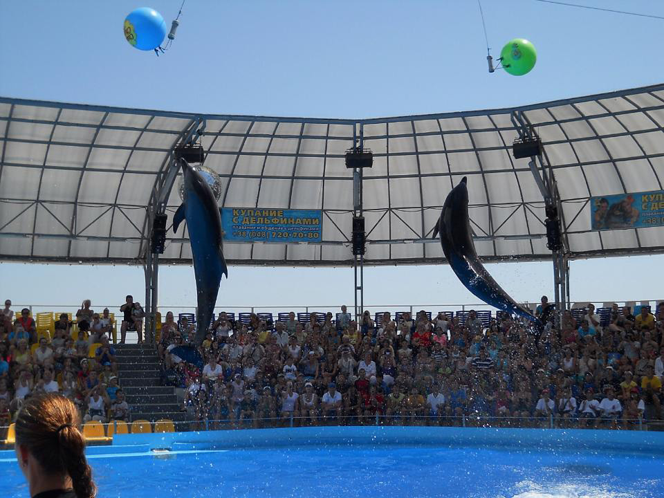 Espectáculo de delfines en Sharm el Sheikh