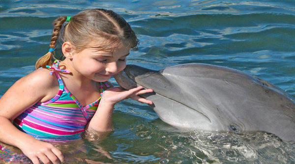 Sharm el Sheikh dolphins activities