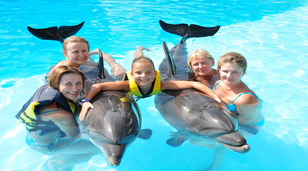 Photo session with dolphins