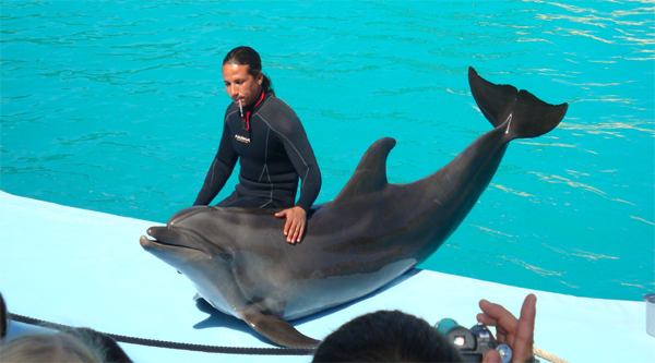 A beautiful dolphin in Sharm el Sheikh performance