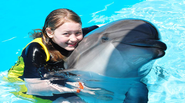 Swim with dolphins activity
