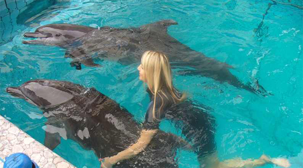 Swim with dolphins in Sharm el Sheikh