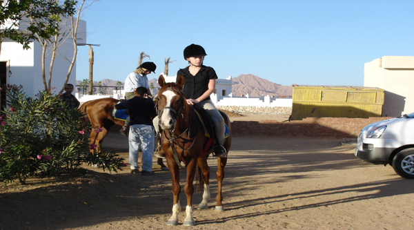 Riding horses in Sharm el Sheikh