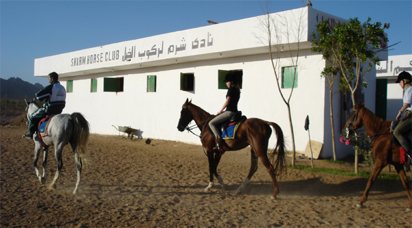 Arabian horse back riding excursion