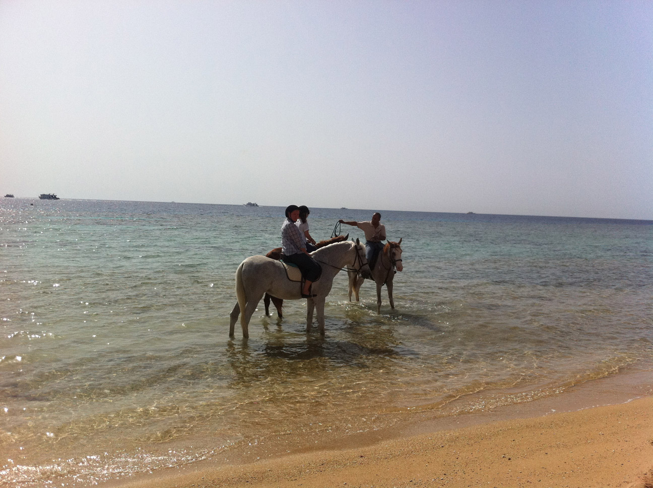 Riding an Arabian horse along Sharm el Sheikh beaches