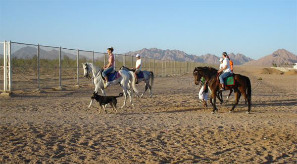 Desert excursion to ride horses