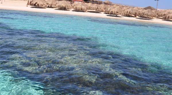 Corales cerca de la isla