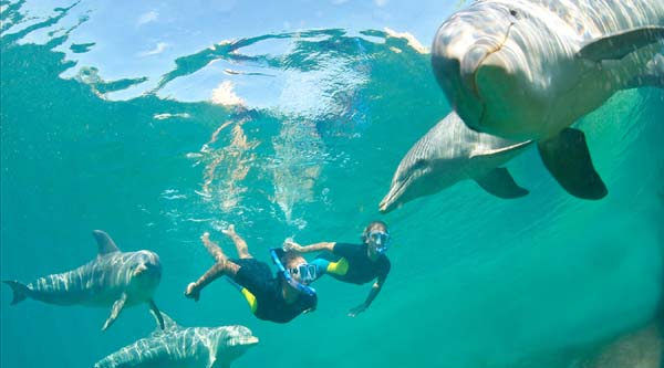 Swimming with dolphins tour from Hurghada