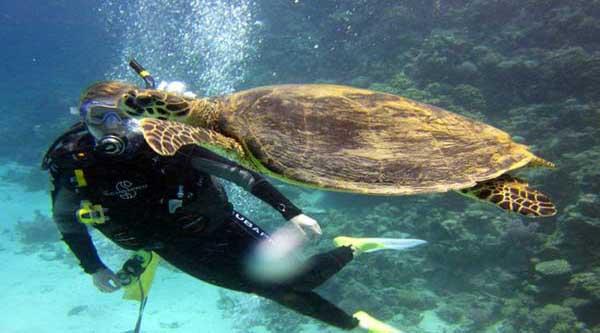 Scuba diving in Hurghada