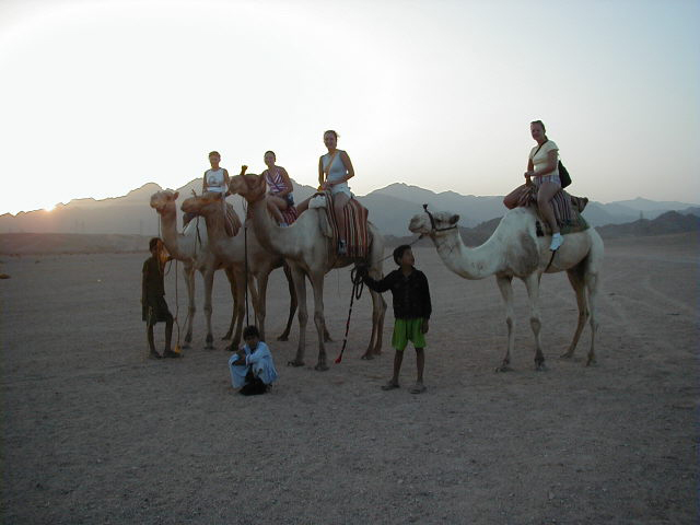 Camel riding tours from Sharm el Sheikh