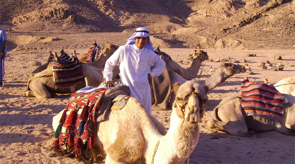 Camel riding to the Bedouins tent from Sharm