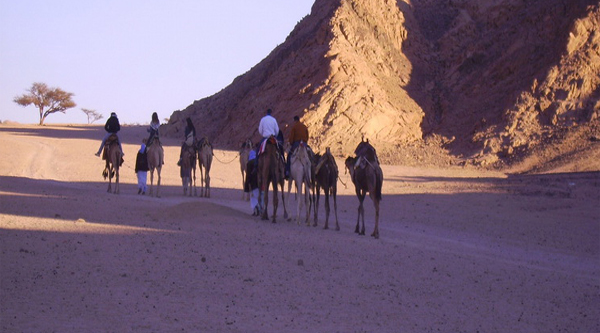 Evening at the Bedouins with Camel riding activity
