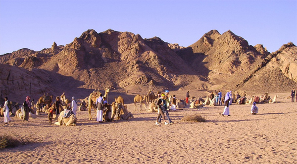 Excursion Camel riding from Sharm