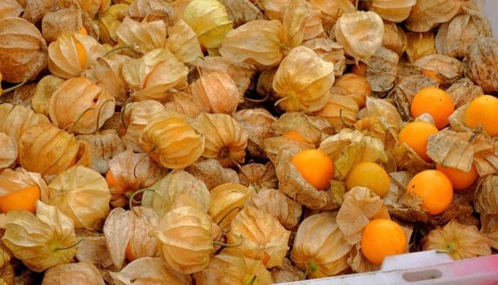physalis golden berry street food Egypt