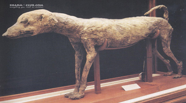 Mummy of a dog.