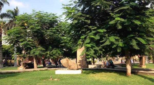 Museum's garden area.